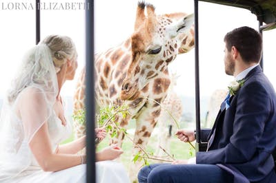 Image result for port lympne wedding giraffe